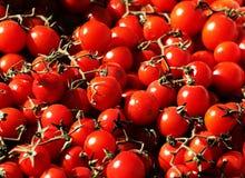 Mazzi di pomodori ciliegia freschi Immagine Stock