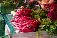 Mazzi di ravanello che si trovano al mercato Immagine Stock