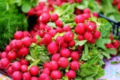Mazzi di ravanello venduti sul mercato dell'agricoltore Immagini Stock Libere da Diritti