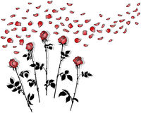 Mazzi di rose Fotografia Stock