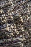 Mazzi di vimini del salice Fotografie Stock