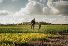 Mazzi obbligatori del figlio e del padre di narcisses sui giacimenti di fiore Fotografia Stock Libera da Diritti