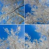 Mazzi spruzzati con neve contro un chiaro cielo blu Lan di inverno immagine stock