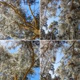Mazzi spruzzati con neve contro un chiaro cielo blu Lan di inverno immagine stock libera da diritti