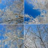 Mazzi spruzzati con neve contro un chiaro cielo blu Lan di inverno fotografia stock