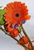 Mazzo arancio del fiore immagini stock libere da diritti