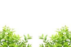 Mazzo astratto delle foglie Fotografia Stock
