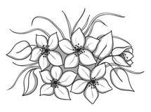 Mazzo in bianco e nero dei fiori con le foglie e l'erba Fotografia Stock Libera da Diritti