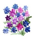 Mazzo blu dei fiori verniciati in acquerello Fotografia Stock