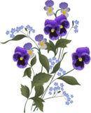 Mazzo blu del fiore su bianco royalty illustrazione gratis