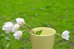 Mazzo con i vari fiori selvaggi bianchi immagini stock libere da diritti