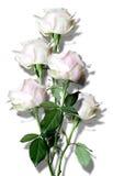 Mazzo dalle rose bianche Fotografia Stock Libera da Diritti