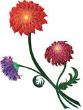 Mazzo dei crisantemi dei colori differenti Fotografia Stock