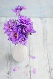 Mazzo dei crisantemi porpora Immagini Stock Libere da Diritti