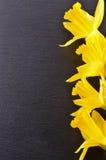 Mazzo dei daffodils gialli Isolato su priorità bassa nera Immagine Stock