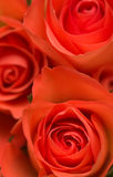 Mazzo dei fiori Fotografia Stock Libera da Diritti