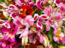 Mazzo dei fiori Alstroemeria Mazzo dei fiori Alstroemeri Fotografie Stock