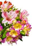 Mazzo dei fiori Alstroemeria Mazzo dei fiori Alstroemeri Immagine Stock