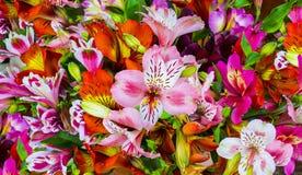 Mazzo dei fiori Alstroemeria Mazzo dei fiori Alstroemeri Immagini Stock Libere da Diritti