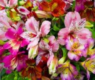 Mazzo dei fiori Alstroemeria Mazzo dei fiori Alstroemeri Fotografia Stock