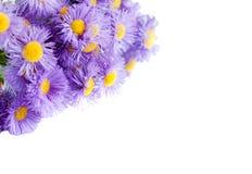 Mazzo dei fiori blu su una priorità bassa bianca Immagini Stock