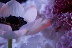 Mazzo dei fiori colorati differenti Fotografie Stock Libere da Diritti