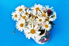 Mazzo dei fiori della margherita bianca sul blu Fotografia Stock Libera da Diritti