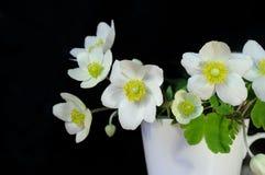 Mazzo dei fiori della sorgente Immagine Stock Libera da Diritti