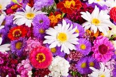 Mazzo dei fiori di estate immagine stock