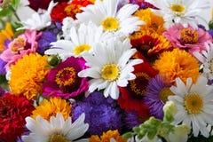 Mazzo dei fiori di estate fotografia stock libera da diritti