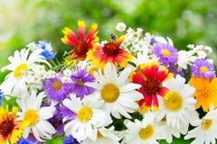 Mazzo dei fiori di estate su fondo verde immagini stock libere da diritti