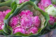 Mazzo dei fiori di loto Fotografie Stock Libere da Diritti