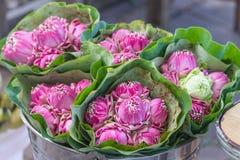 Mazzo dei fiori di loto Immagine Stock