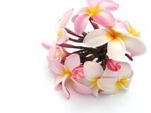 Mazzo dei fiori di Plumeria Fotografia Stock Libera da Diritti