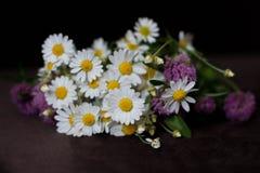 Mazzo dei fiori differenti Immagini Stock Libere da Diritti