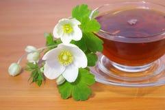 Mazzo dei fiori e del tè della sorgente Fotografia Stock Libera da Diritti