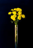 Mazzo dei fiori gialli Immagine Stock