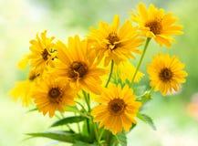 Mazzo dei fiori gialli della margherita immagine stock