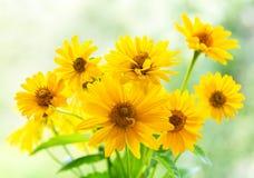 Mazzo dei fiori gialli della margherita fotografia stock libera da diritti