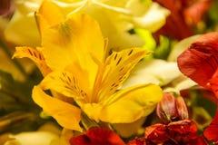 Mazzo dei fiori gialli e rossi, alstroemeria Immagine Stock Libera da Diritti