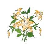 Mazzo dei fiori nei colori semplici su priorità bassa bianca, vettore illustrazione vettoriale