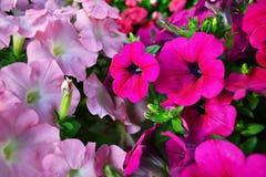 Mazzo dei fiori rosa Fotografia Stock