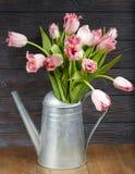Mazzo dei fiori rosa del tulipano in annaffiatoio Fotografia Stock Libera da Diritti