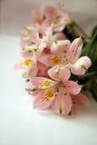 Mazzo dei fiori rosa di Alstroemeria Fotografie Stock Libere da Diritti
