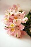 Mazzo dei fiori rosa di Alstroemeria Fotografia Stock