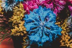 Mazzo dei fiori selvaggi Immagini Stock