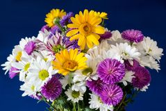 Mazzo dei fiori sui precedenti blu fotografia stock libera da diritti