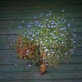 Mazzo dei fiori sulla parete Fotografia Stock Libera da Diritti