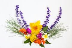 Mazzo dei fiori variopinti su fondo bianco Fotografie Stock Libere da Diritti
