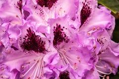 Mazzo dei fiori viola Dettaglio di un mazzo immagini stock
